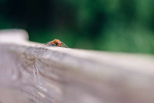 Ważka Bokeh Blur The Background Nature Insect