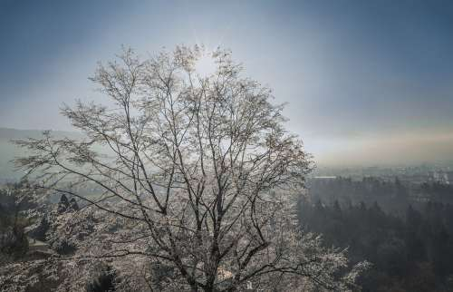 Winter Tree Ice Snow Nature Cold Landscape Trees