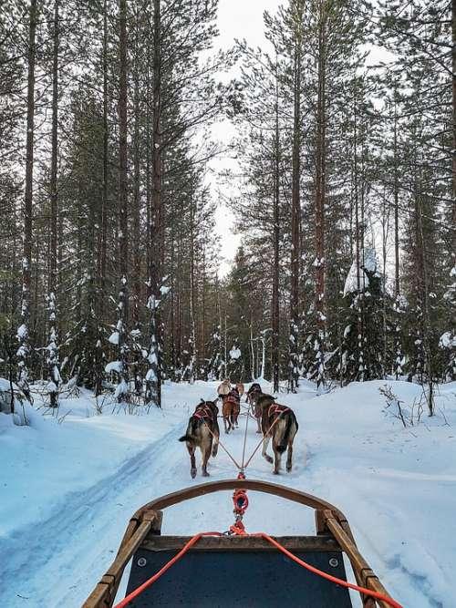 Winter Outdoors Snow Scandinavia Sled Dog