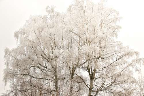 Winter Tree Snow Nature Landscape Cold Wintry