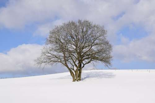 Winter Wonderland Eifel Snow Winter Wintry Tree