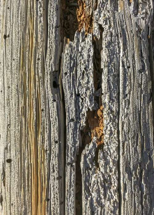 Wood Closeup Texture Nature Natural Wooden Bark