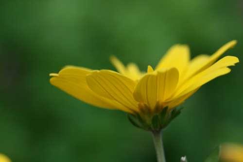 yellow flower close up garden fresh