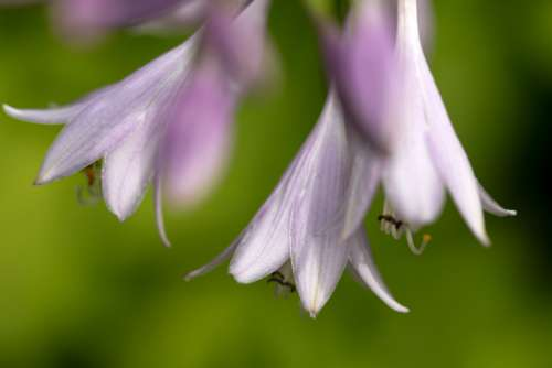 purple flowers macro nature natural