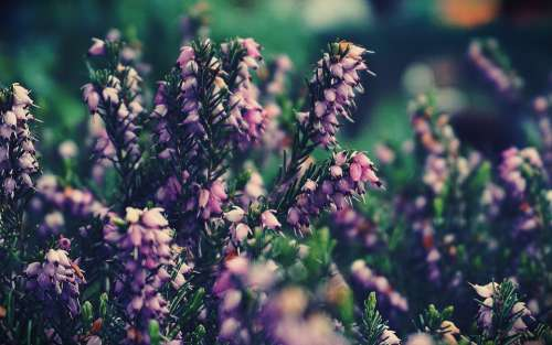 flowers plants lilac nature bloom