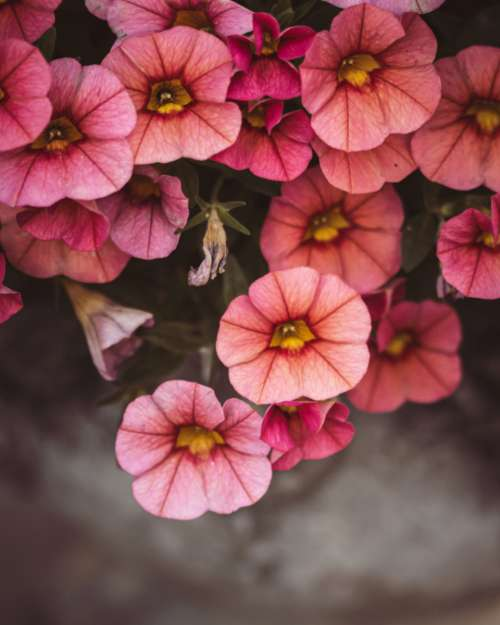 flowers floral background pink top