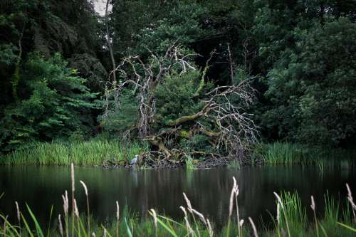 A Gnarly Tree By The River Shelters A Heron Photo