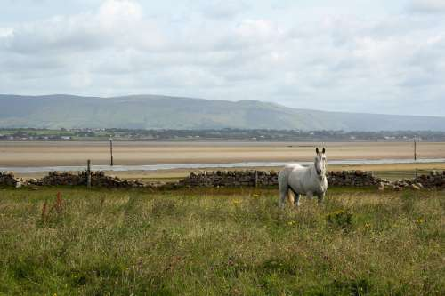 A White Horse In A Field Walled Off From A  Beach Photo