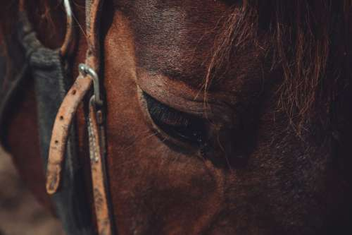 Close Up Of Horses Face Photo