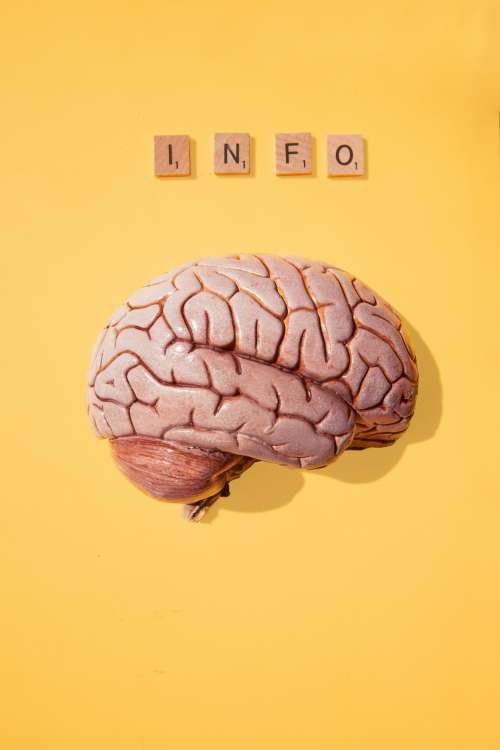 What Does A Brain Need? Photo