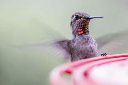 Iridescent colors on hummingbird