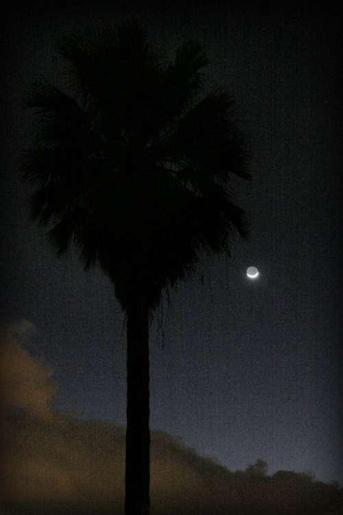 Grainy dark palm and moon