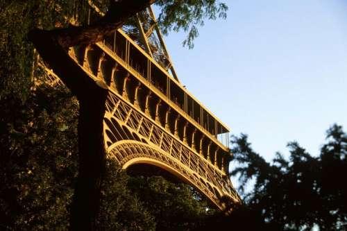 Eiffel Tower and Tree Limb