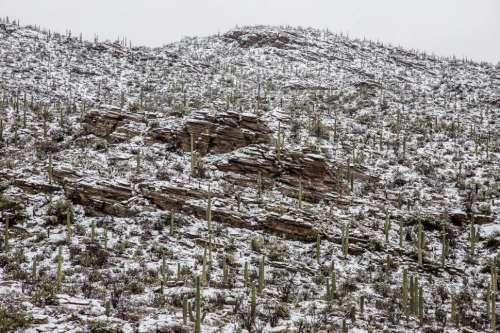 Hillside of Layered Rocks and Cactus After Snow
