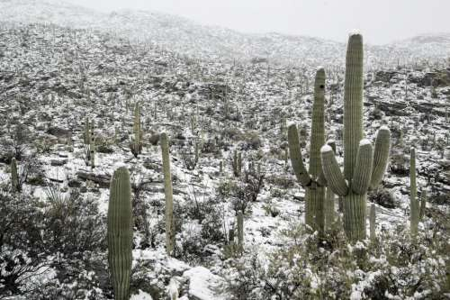 Hill of Snow Near Tucson
