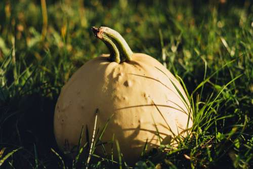 Pale yellow pumpkin on the grass 3