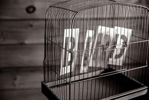 Bird Cage Free Photo