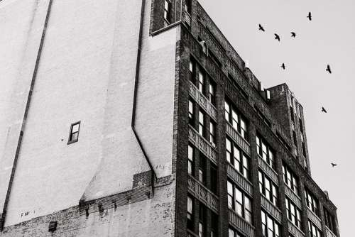 Birds Flying Above Building Free Photo