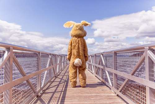 Rabbit Costume Free Photo