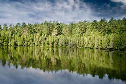 Beautiful Forest & Lake Free Photo