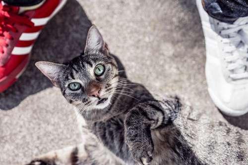 Curious Cat Free Photo