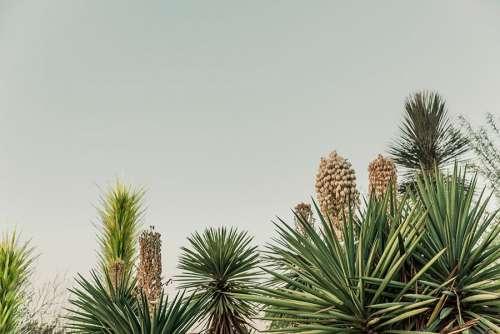 Cactus Growing in Desert Free Photo