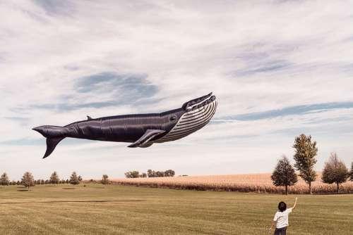 Whale Kite Free Photo