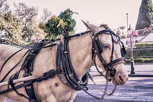 Horse Carriage Free Photo