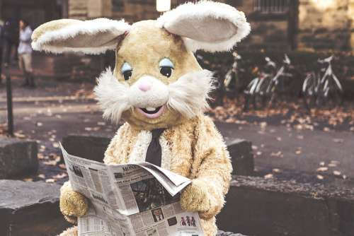 Bunny Reading Free Photo