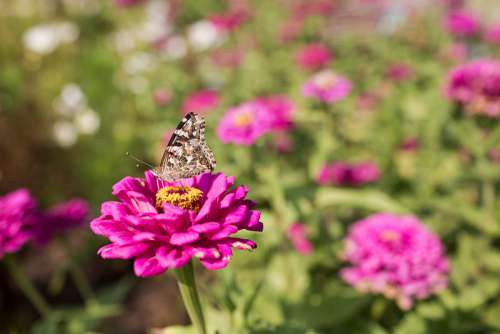 Butterfly Flower Free Photo