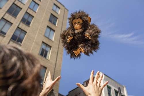 Flying Monkey Free Photo