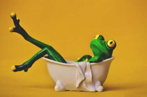 Frog in Bath
