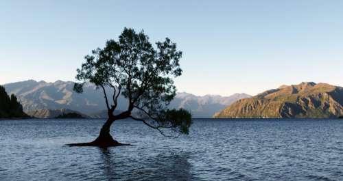 Lone Water Tree