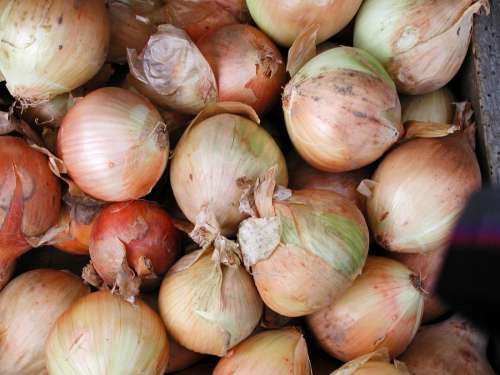 Onions Farmers Market