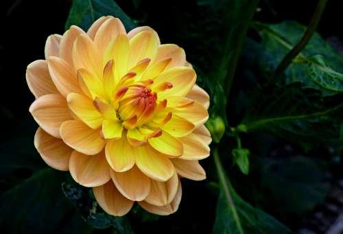 Yellow Flower Bloom