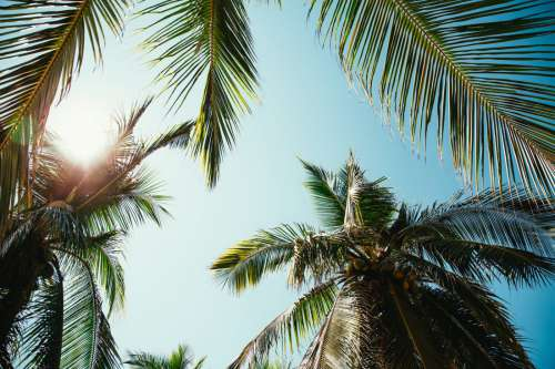 Palm Trees Sunlight