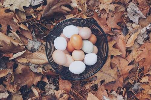 Autumn Eggs