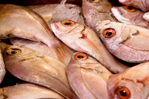 Raw Fish at Market
