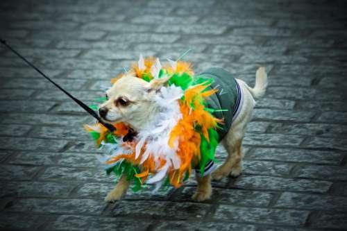 St. Patrick'S Day Madra