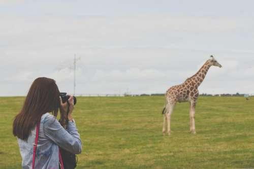 Woman Taking Photos Of A Giraffe