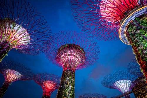 Marina Bay Garden Singapore at Night
