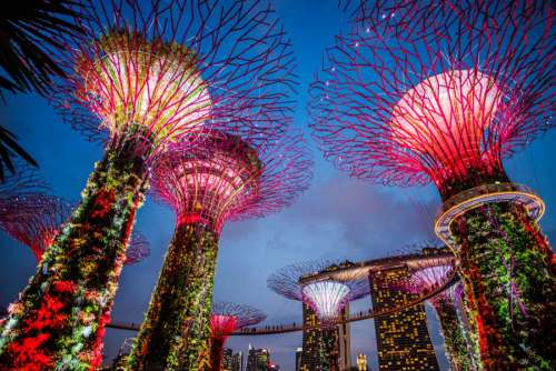 Marina Bay Garden Singapore Night
