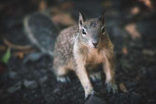 Curious Squirrel