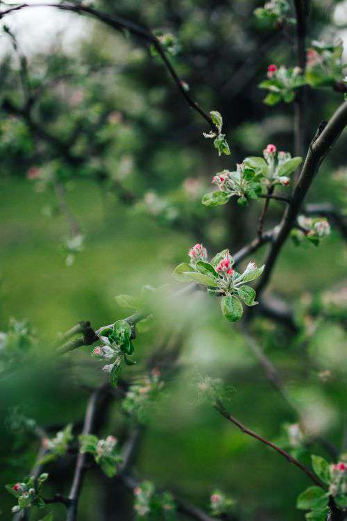 Close-ups of leaves, flowers and fruit on trees, part 1