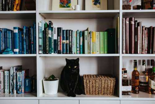 Black cat by a wicker basket on a white bookcase shelf