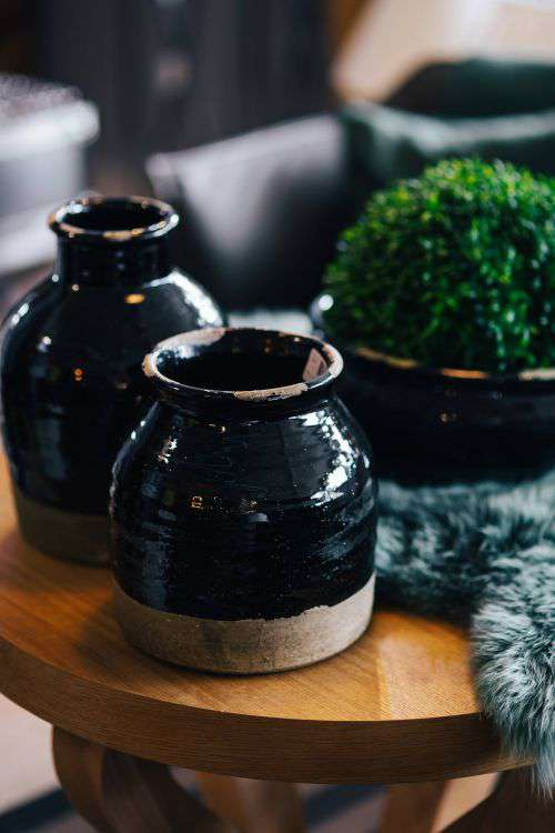 Green plant with black pots and a soft cyan rug