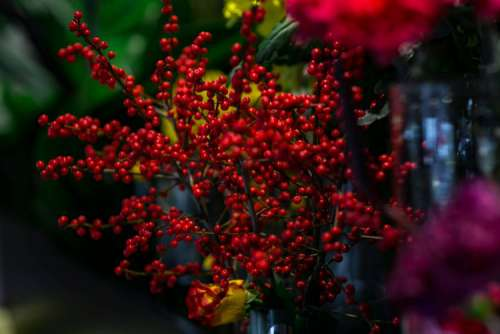 Red rowan with a colourful arrangement of flowers