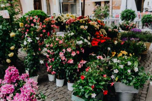 Flower shop in Castelfranco Veneto, Italy