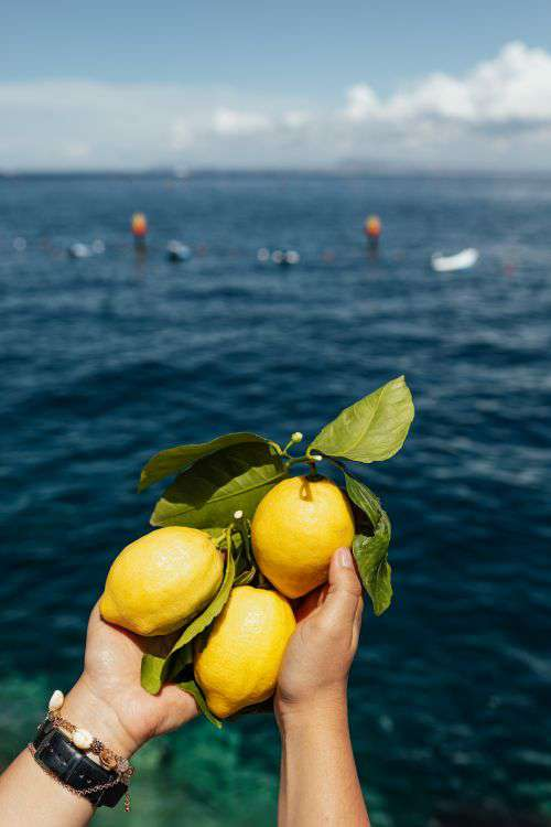Lemons from Sorrento, Italy