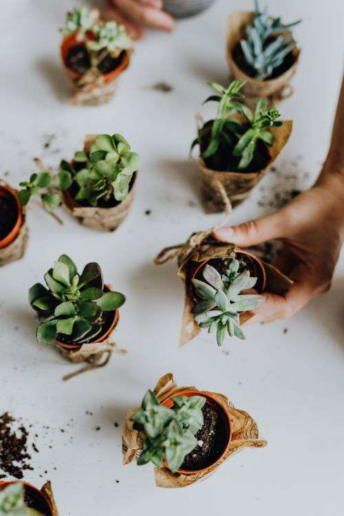 Replanting House Plants
